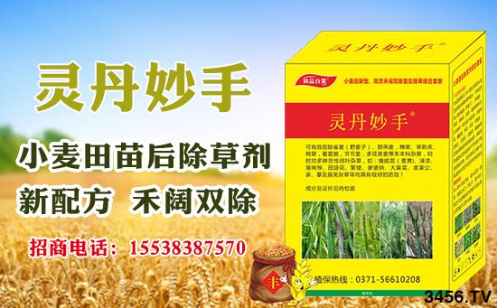 小麦田怎么除草?小麦田除草技术
