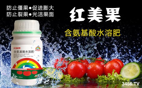西红柿叶子卷怎么办 西红柿卷叶病打什么药